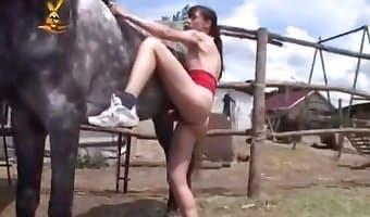 suck horse