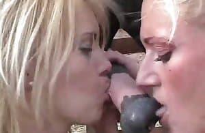 horse-sex
