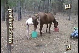 fuck horse-sex