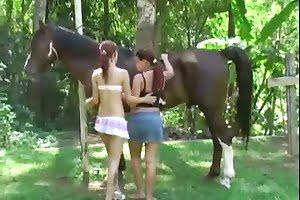 bestiality horse sex