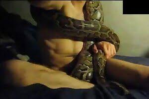 bestiality, snake