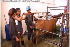 bestiality farmsex